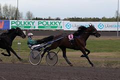 IMG_2655 (lovelymelancholy) Tags: horses horse hevoset hevonen horseraces ravit imrautio ravihevonen oulunravirata