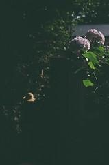 谷中 by Nikon FM2 2016年6月18日 (Tokutomi Masaki) Tags: 2016 東京 東京路地裏散歩 tokyo japan 散歩 walk フィルムカメラ フィルム film fm2 nikon 谷中 yanaka