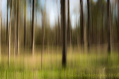 Sweeping Green Dreams (HSS) (13skies) Tags: new trees light sun green grass wow outside movement woods shadows sunday creative vision icm wooded intentionalcameramovement happyslidersunday