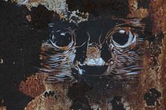 Art de rouille et d'or (Pi-F) Tags: art texture chat noir peinture corniche tache blanc panneau travaux fer visage beyrouth liban rouille artiste palissade