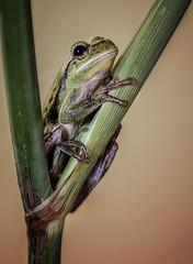 Descanso en verde.... (JACRIS08) Tags: lapalma