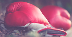 (lost) boxing gloves (HMM) (Stadt_Kind) Tags: macro makro mondays summer olympic games 2016 sony ilce7 a7 bokeh bokehlicious dof boxing gloves boxhandschuhe stadtkind kempten bavaria germany europe new flickr popular macromondays summerolympicgames2016 sonyilce7 sonyfe2890macrogoss