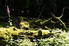 P1020935 (Michael Buch 65) Tags: naturparksaarhunsrück erbeskopf hochwald