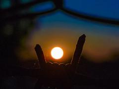 Pôr do Sol no Pilarzinho (Eduardo PA) Tags: curitiba paraná nokia pureview microsoft windows phone 950xl lumia wp pôr do sol no pilarzinho arame farpado