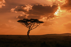 just love the Serengeti (Stephan Haecker) Tags: serengeti sunset clouds sky afrika tree acacia