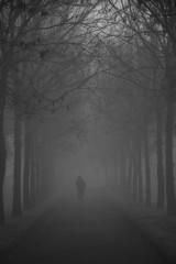 percorsi di nebbia (mat56.) Tags: paesaggi paesaggio landscapes landscape nebbia fog misty alberi trees viale percorsi bianco black nero white padana pianura lombardia lodi lodigiano oriolitta ciclista antonio romei mat56 cycling paths atmosfera atmosphere monocromo monochrome
