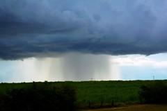 Chuva sobre um campo (marcusviniciusdelimaoliveira) Tags: nuvem chuva campo plantao cu gua vida cloud rain plantation horizon sky wheather clima tempo