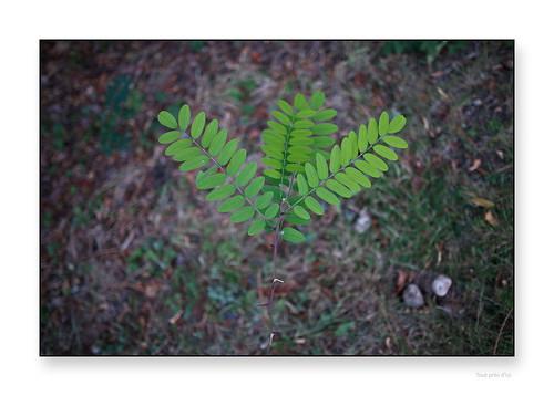 "d'une simplicité biologique • <a style=""font-size:0.8em;"" href=""http://www.flickr.com/photos/88042144@N05/29703409895/"" target=""_blank"">View on Flickr</a>"