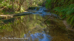 Blue Moutains Wentwrth Falls walk.... (Beckett_1066) Tags: fall charles darwin bluemountains falls wentworth