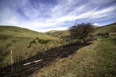 Burnt Out (Fifescoob) Tags: fern tree canon fire path hill burn hillside hawthorne ultrawide broom burned ochilhills 14mm menstrie samyang