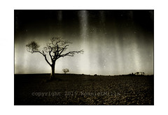 Dancin' with Rihanna (RonnieLMills) Tags: dancin rihanna tree lone ploughed field crawfordsburn bangor county down northern ireland textured textures magical light rays swingers