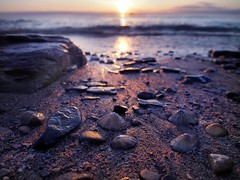 Seashells on the Seashore (Amble180) Tags: wild olympus northumberland about 1250 amble em5