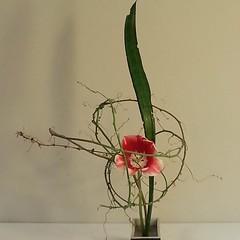 Donna's #ikebana