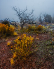 Foggy morning in western Colorado (Dennis Herzog) Tags: monument weather fog colorado desert wildflowers nationalparks coloradonationalmonument coloradoplateau westerncolorado floratrees
