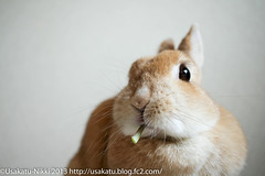 IMG_5972-1 (Rabbit's Album) Tags: pet cute rabbit bunny animals coco   netherlanddwarf    canonx7i efs24mmf28stm