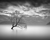 S U R V I V A L (Weeman76) Tags: longexposure newzealand le centralotago wanaka thattree nd110 paulwheeler