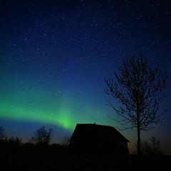 Blue Pillar Rising (SongLoria) Tags: aurora nightsky northernlights auroraborealis albertaaurorachasers