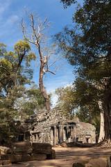 The Ancient Ta Prohm Temple in the Rain Forest. (baddoguy) Tags: travel blue sky tree history tourism archaeology monument nature beauty vertical architecture outdoors photography ancient rainforest asia cambodia khmer antique religion nopeople unescoworldheritagesite backgrounds preserved spirituality tradition root siemreap angkor hinduism ancientcivilization mythology covering tropicaltree traveldestinations colorimage taprohmtemple famousplace hindugod oldruin internationallandmark surroundingwall siemreapprovince templebuilding plantpart eastasianculture stonematerial cambodianculture stoneobject wallbuildingfeature rockobject lionfeline