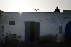 Morocco (fredcan) Tags: street door travel man bird sunshine bicycle silhouette wall harbour seagull streetscene morocco shade maroc maghreb medina oldtown moroccan northernafrica fredcan