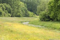 DN9A8690 (Josette Veltman) Tags: macro nature canon bug natuur bugs photowalk lente zwolle landschap insecten ivn westerveldsebos photowalkzwolle
