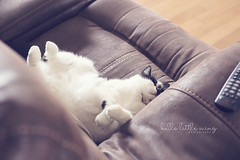 Rough life (Hello Little Wing) Tags: pet cat kitty lazy softtones canongirl