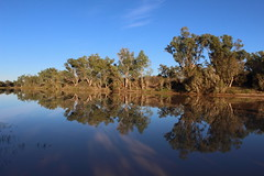 IMG_0205 (Melissa Macgill) Tags: trees creek reflections cooper outback sa southaustralia