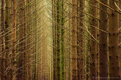Timber forest, Highands (alǝxH3o) Tags: forest tree plants scotland europe uk highlands plantation timber foam dsc07957cogwm dsc07957cog sonya7 sonya7m2 sonya7ii ilce7m2 minoltaaf35105mmf3545 beercan