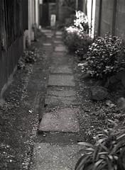 Up the Garden Path (RunnyInHongKong) Tags: film japan mediumformat tokyo 6x45 kodaktmax400 nezu mamiya645protl nikoncoolscan9000 mamiyasekor80mmf19 nikonscan41