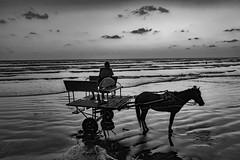 End of a busy day... (mehtasunil) Tags: leica blackandwhite monochrome monsoon lowtide seashore horsecart leicacamera alibag leicalens leicaq leicaforum leicaimages leicaindia