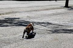 Lisbona (CarloAlessioCozzolino) Tags: dog portugal cane lisboa skate lisbona portogallo
