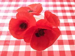 Amapolas (efe Marimon) Tags: primavera mantel amapolas appleiphone4s felixmarimon