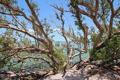 Sea Through - Florida Keys (Andrea Moscato) Tags: wood blue light shadow sea sky usa seascape tree green nature water america us leaf sand day branch unitedstates natural vivid natura caribbean seashore statiuniti andreamoscato