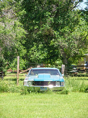 Sparkling smile (unforgivn1) Tags: car grass weeds galena sd south dakota black hills hidden treasure yard grinning hood scoop hot rod sparkling smile