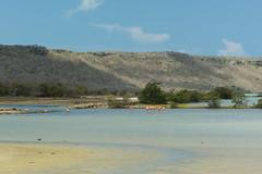 Flamingo area at Williwood (timohermann) Tags: flamingos curacao curaao jankok sintwillibrordus williwood