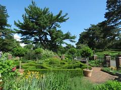 IMG_2457b (Naturecamhd) Tags: plants green nature canon botanical bronx crocus powershot hedge botanic thebronx eco nybg hedges newyorkbotanicalgarden herbgarden canonpowershotsx60hs sx60hs