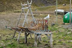 022-X3002265 (Roy Prasad) Tags: ocean sea mountain lake snow ice expedition nature norway canon sony glacier svalbard arctic fjord prasad spitsbergen iceburg longyearbyen rx10 5ds 1dx royprasad rx10m3 5dsr 1dxm2