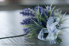 Freestyle (Fabrizio Paolinelli) Tags: uccelli volo fabrizio fiori acqua viola tarquinia piccioni fiocchi