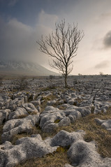 Southerscales 1 (Andrew Whitham Photography) Tags: tree landscape nikon yorkshire lee limestone digitalphotography yorkshiredales d800 3peaks ingleborough amateurphotographer dalephotographic awhithamphotographycom