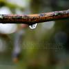A DROP OF RAIN (Simon R Brook) Tags: water lens branch 2870mmf3545d effect raindrop d7000 simonrbrook
