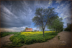 (088/15) Yellow fields (Pablo Arias) Tags: trees espaa naturaleza flores primavera nature photoshop spain colours arboles colores cielo nubes hdr texturas smrgsbord photomatix sigma1020 fuenteelsaz olequebonito nikond300 pueblosdemadrid greatmanipulart grouptripod oltusfotos goldenvisions pabloarias