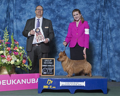 #1 Australian Terrier in the USA