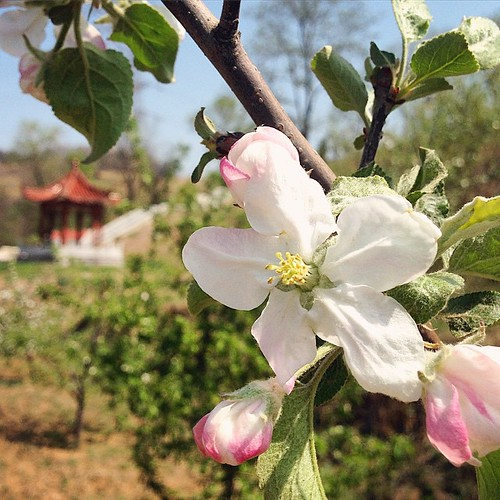 It's finally warm!!! Flowers from Yantai.