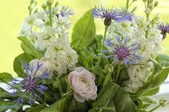 Because I love you (dorrisd) Tags: flowers floral leaves petals mixed indoor stems bouquet bloemen gemengd knoppen bladeren ranonkel bloemblaadjes canonef50mmf18ii korenbloemen violieren