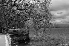 Parc Mon Repos (Didier Mouchet) Tags: blackandwhite nature clouds landscape switzerland landscapes nikon suisse geneva noiretblanc lac nuages genve  genf lakeofgeneva laclman  littoral       parcmonrepos     nikond5300 didiermouchet