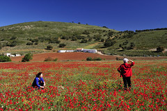 Campo de amapolas /Alhama de Granada (Lucas Gutirrez) Tags: primavera paisaje granada alhama campodeamapolas ventasdezafarraya granadanatural