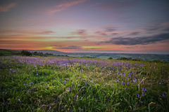 Dartmoor (Brad Discombe) Tags: flowers sunset sky skyline canon landscape long exposure devon exeter dartmoor 100d