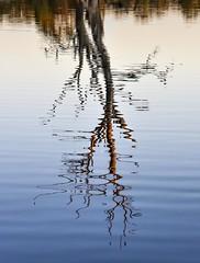 Wonga Wetlands (phunnyfotos) Tags: sunset lake reflection tree water reflections evening twilight nikon dusk australia nsw eucalypt d750 newsouthwales billabong gumtree murrayriver goldenhour wetland albury riverina murrayvalley splitterscreek wongawetlands riverinahighway phunnyfotos riverinahwy nikond750