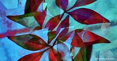 (ojoadicto) Tags: blue red macro leaves hojas autum otoo digitalmanipulation artisticphotography