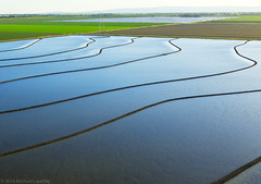 Flooded rice fields (Michael Layefsky) Tags: california rice aerial photograph fields agriculture davis flooded sacramentovalley