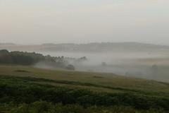 Summer Mists (Derbyshire Harrier) Tags: bigmoor 2016 summer mist bracken rspb nationaltrust barbrook peakdistrict peakpark easternmoors moorland morning woodland gardomsedge